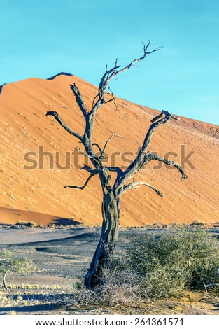 Dune and dead tree in Sossusvlei plato of Namib Naukluft National Park - Namibia, South Africa - stock photo