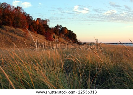 Dune grass - stock photo