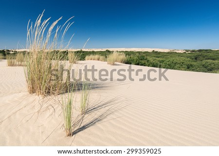 Dune grass in national park Donana in Andalusia, Spain - stock photo