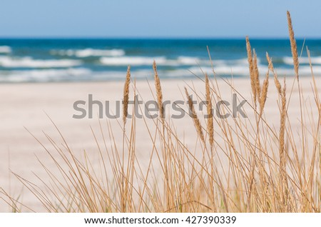 dune grass sea landscape - stock photo