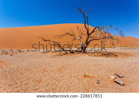 Dune 45 in sossusvlei Namibia with dead tree, best of Namibia landscape - stock photo