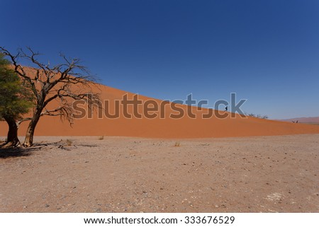 Dune 45 in sossusvlei Namibia with dead tree, best of Namibia landscape, Dune 45 is the biggest dune in the world