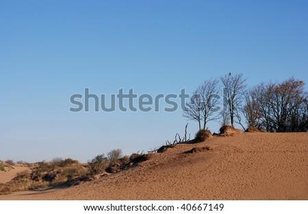 Dune landscape found in dune areas near Haarlem, The Netherlands - stock photo