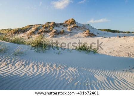 dune landscape in the evening light - stock photo