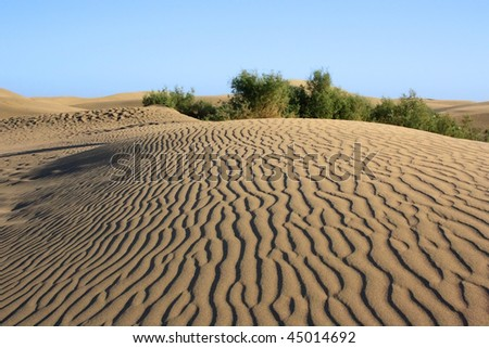 dune with wonderful texture with green bushes on blue sky. Gran Canaria - stock photo