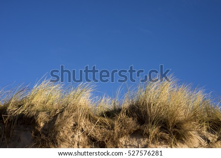 Dunes at the Danish North Sea coast on the beach of Skallingen, Esbjerg.