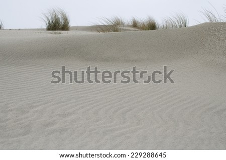 Dunes at the sea - stock photo