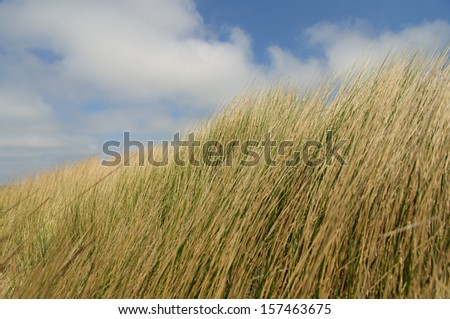 Dunes dancing in the wind with a cloudy sky in the background - stock photo