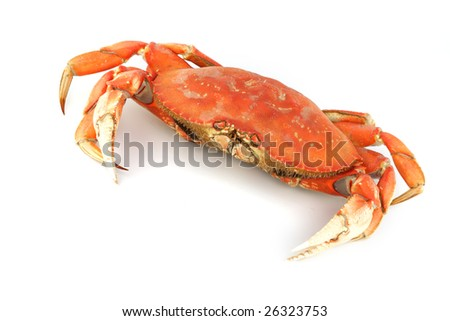 dungeness crab - stock photo
