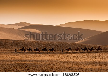DUNHUANG,CHINA-OCTOBER 16: A group of camels walking at sunset in the Mingsha sand dunes mountain on October 16, 2013 in Dunhuang, China. - stock photo