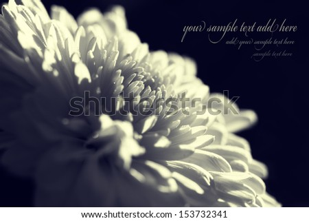 duotoned abstract flower background with space for sample text- suitable for card design  - stock photo