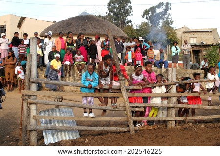 DURBAN, SOUTH AFRICA - JUNE 29: Family and friends gather in a rural village to watch a traditional African wedding celebration known as Umabo in Kwa Zulu Natal, South Africa on June 29, 2013.