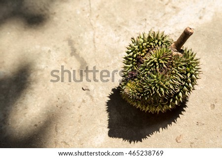 durian fruit tropical on ground and shadow light copy space