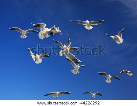 During feeding, a seagulls, trying to catch the thrown slice of bread, make dizzy tricks - stock photo