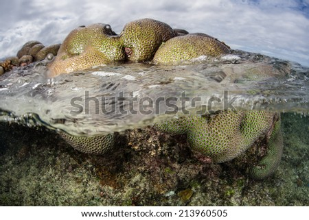 During low tide, the South Pacific Ocean washes over a coral colony growing in the shallows of the Solomon Islands. This part of the Coral Triangle is known for its high marine biological diversity. - stock photo