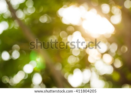 During the late afternoon sun shining through the trees. Lakษa Becket-blur with Optical Flare . - stock photo
