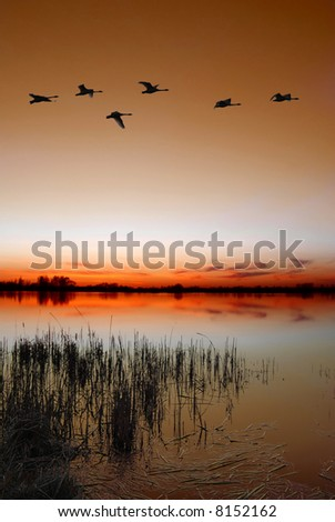 Dusk by the lake with a flock of ducks - stock photo