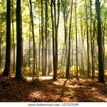 Dusk in forest - stock photo
