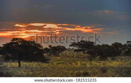 Dusk in the Kalahari desert, Grootkolk, Kgalagadi transfrontier Park, Northern Cape, South Africa, multiple exposure image stack. - stock photo