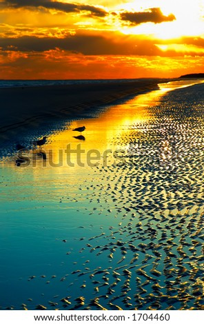 Dusk on Hilton Head beach with birds. - stock photo