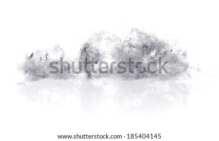 Dust bunnies on white reflecting background.
