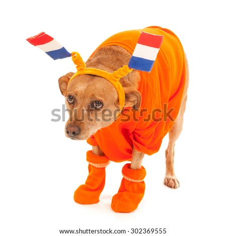 Dutch dog in orange with flags as soccer supporter - stock photo