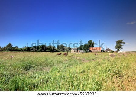 Dutch farm in meadow with sheep under blue sky - stock photo