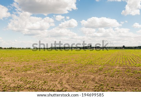 Dutch farmland with rows of newly sown sugar beet plants in the background and some wind turbines. - stock photo