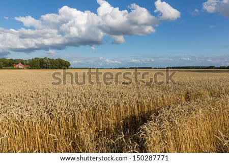 Dutch farmland with wheat field and cloudscape - stock photo