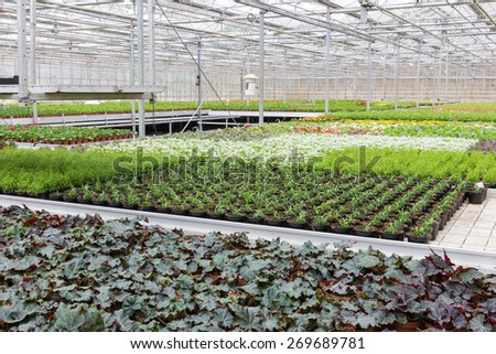 Dutch Greenhouse with cultivation of several plants and flowers - stock photo