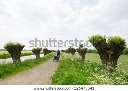 Dutch landscape in spring with row pollard willows and cow parsley and man with dogcar on the bike - stock photo