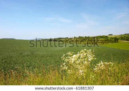 Dutch landscape with hills and corn fields - stock photo