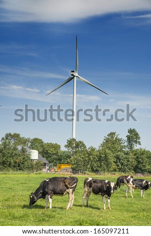 Dutch meadow with cows on a farm,with wind turbines and solar energy background