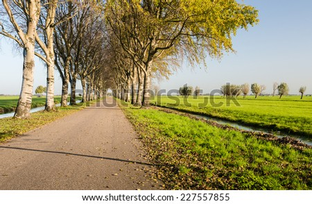 Dutch polder landscape in the Netherlands with ditches and rows of trees on both sides of the road on a sunny day in the autumn season. - stock photo