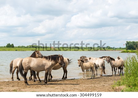 Dutch river Nederrijn with horses near the water - stock photo