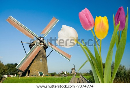 Dutch windmill and colorful tulips - stock photo