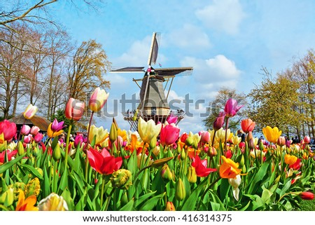 Dutch windmill and colorful tulips in spring garden of flowers Keukenhof, Holland, Netherlands - stock photo
