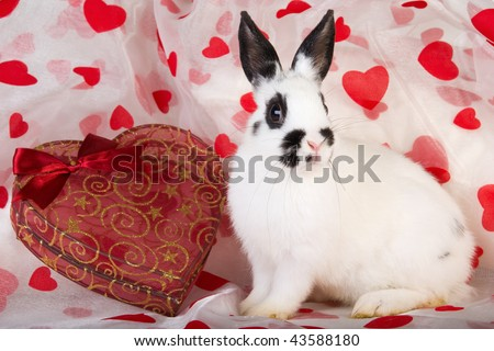 Dwarf bunny with valentine heart box on heat printed fabric - stock photo