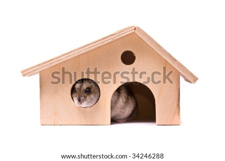 Dwarf hamster in house, studio shot, isolated on white - stock photo