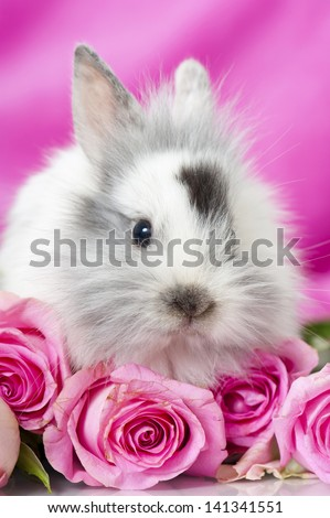 Dwarf rabbit with pink roses - stock photo