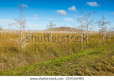 Dwarfed bald cypress trees in winter dormancy in Everglades National Park, Florida - stock photo