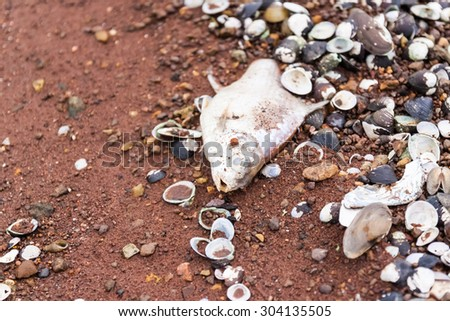 Dying fish (bream) on shoal close up - stock photo