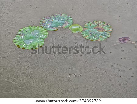 Dying lotus leaves in January, in the rain, in a lake at theTomb of Minh Mang, Vietnam - stock photo