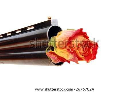 dying rose in a barrel (make love not war) - stock photo