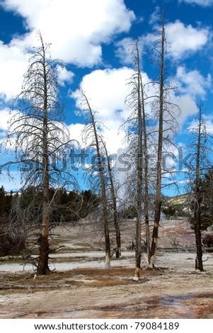 Dying Tree - stock photo