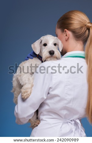 Each tiny patient will steal your heart. A young female vet holding an adorable dog and standing from behind against blue background - stock photo