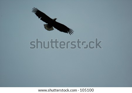 Eagle (Alaska) - stock photo