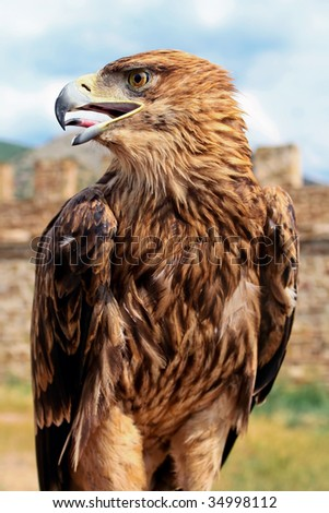 Eagle at the fortress - stock photo