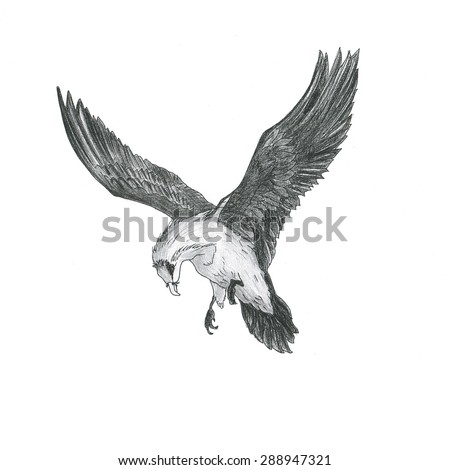 Eagle drawn with a pencil, sketch
