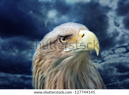 Eagle face other storm background - stock photo